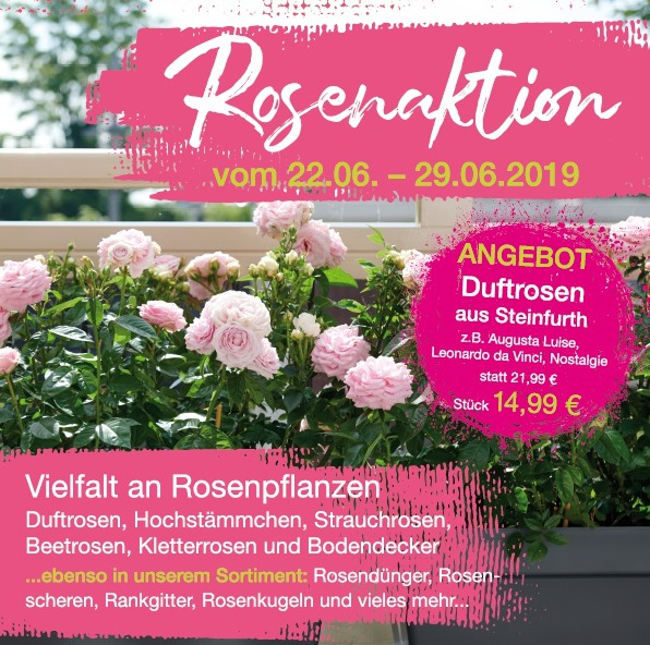 Rosenaktion Juni 2019